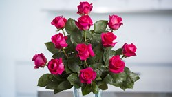 Picture of Dark Pink Roses Arrangement (12 nos)